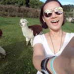Me trying to get a wefie with the male alpaca