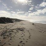 The Oregon coast dunes