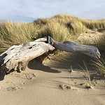 Drift wood on the shore