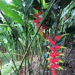 Flora of the plantation