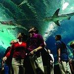 Nearby Newport Aquarium