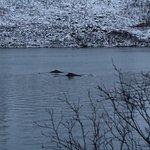 Grotfjord Foto