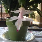 my own christmas cactus...there's no real plants in this place,