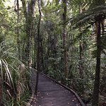 Kauri Coast Top 10 Holiday Park Foto