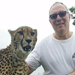 """Its a """"tame"""" cheetah.You feel the raw, wild, power. NO drugs or abuse but love from the rangers"""