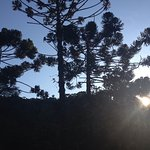 Araucarias e por do sol