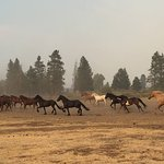 Wranglers leading horses to the pasture after a day of riding