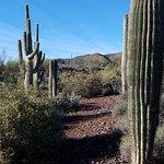 The beginning of the desert hiking trail