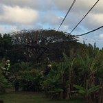 Maui Zipline Company Foto