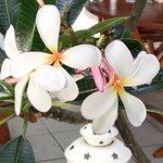 Fleur et ces parfum devant la kaz 😀