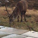 wildlife outside bedroom morining day1