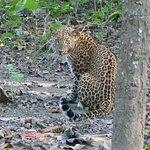 Foto de Narayani Safari Hotel