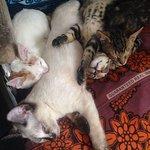 Bongwe babies! Best of friends....