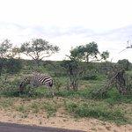 Foto de Baobab Ridge