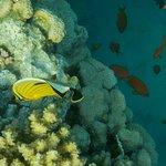 Photo of Marina Beach Resort
