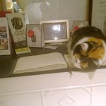 Feline receptionist !