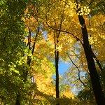 beautiful fall canopy
