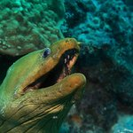 Dive Friends Bonaire Foto