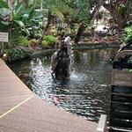 Mientras desayunamos rodeados de fuentes con peces de colores