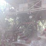 The Lotus Garden Foto