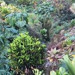 Lava Tree State Park Foto