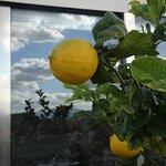 lemon trees on the roof terrace