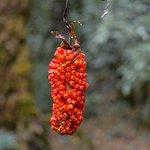 A rare fruit / flower