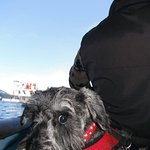 Our little dog loved the boat trip