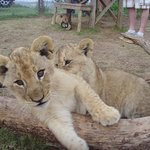 Foto de Seaview Lion Park