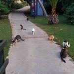 unsere lieben Katzen an ihrem Katzenhaus der Tierhilfe Belek