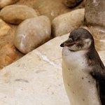 SEA LIFE Blankenberge Foto