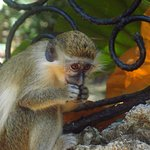Don't miss the monkeys, highlight of my trip