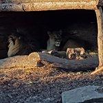 Copenhagen Zoo Foto