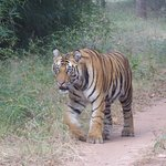 Safari organised by tigergarh