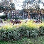 Photo of Disney's Animal Kingdom Villas - Kidani Village