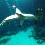 hammerhead shark in the tank at Sea Life Park