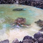 Sea Turtles at Sea Life Park