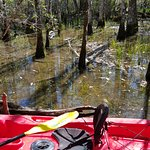 Kayaking in the swamp off Wakula River