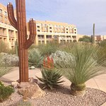 amazing desert landscaping near the lawn area