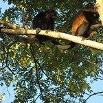 The Howler Monkey Hotel Foto