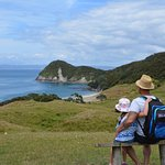 Overlooking Smugglers Cove, 5 min drive from Taurikura Bay