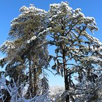 Three Pines View Photo