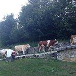 Photo of Agriturismo Le Prata