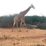 Mateya Safari Lodge Photo