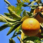 Ein Orangenhain gehört zum Außenbereich.