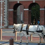 One of the horse and buggy rides around historic Philadelphia,