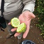 California Citrus State Historic Park Foto
