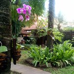 Keindahan bunga Anggrek yang menghiasi halaman hotel