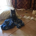 Noushy le petit-chat (the hotel cat)
