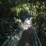 Hanging bridges were sturdy and not too swingy.